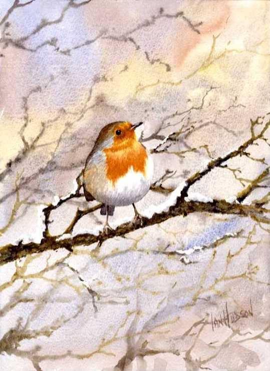 Robin ©Ian Hudson